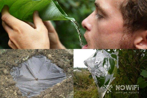 как найти питьевую воду на необитаемом острове
