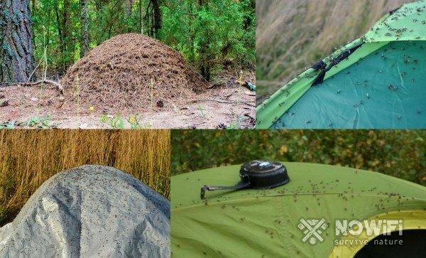 как выбрать место для укрытия в лесу