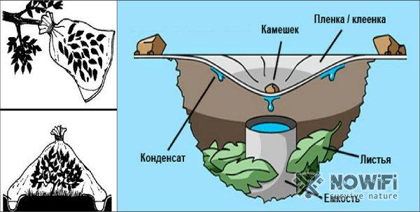 как добыть воду из листьев