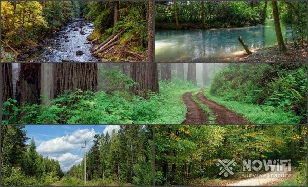 что делать если потерялся в лесу