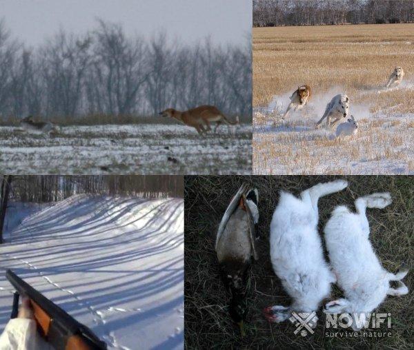 Охота на зайца с подхода