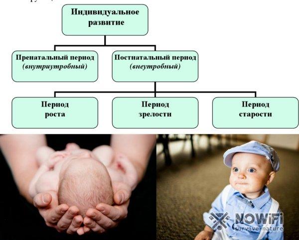 Постнатальный период онтогенеза человека