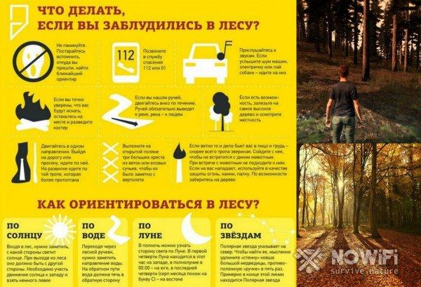 Базовые ориентиры в лесу