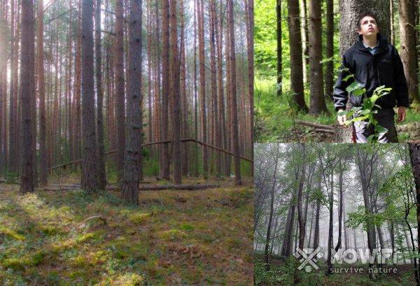 Дополнительные ориентиры в лесу